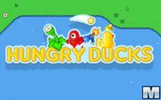 Hungry Ducks